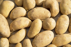 Potatoes raw vegetables food in market for pattern texture and background Royalty Free Stock Image