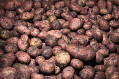 Potatoes raw vegetables food pattern Stock Images
