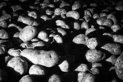Potatoes raw vegetables food pattern Stock Image