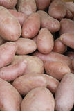 Potatoes raw vegetables Royalty Free Stock Photo
