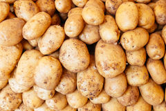 Potatoes raw vegetables food for pattern, texture or background Royalty Free Stock Image