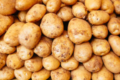 Potatoes raw vegetables food for pattern, texture or background Stock Image