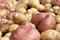 Potatoes raw vegetables food on sacking for pattern texture and background Royalty Free Stock Photo