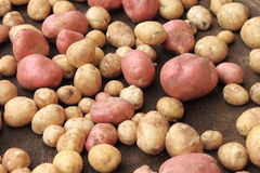 Potatoes raw vegetables food on sacking for pattern texture and background Stock Image