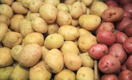 Potatoes Red & White Stock Photography