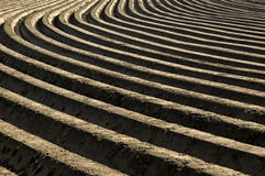 Potatoes ridges in a rural landscape, Netherlands. Plowed fields, hills with machine-crafted, ridging of the soil, in which potatoes are planted Stock Photo