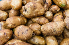 Potatoes russet or baking in bulk Stock Photo