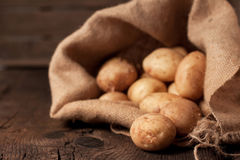 Potatoes in sack. Harvest potatoes in burlap sack on rustic background Royalty Free Stock Photos