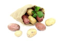Potatoes in a sack Royalty Free Stock Image