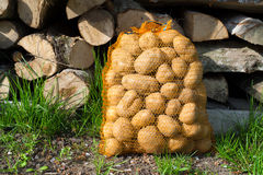 Potatoes in sack Stock Images