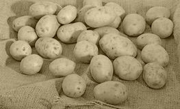 Potatoes and  sack Royalty Free Stock Photo