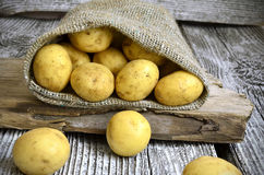 Potatoes in the sack. Stock Image