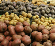Potatoes For Sale. Bins of Red, Yellow, Purple, and White Potatoes in a Market royalty free stock photo