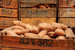 Potatoes. For sale at the local market of Rabat, Morocco Royalty Free Stock Photos