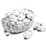 Potatoes scetch in a basket on white bsckground Royalty Free Stock Photo