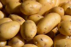 Potatoes. Shot of some raw Potatoes Royalty Free Stock Photos