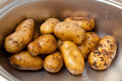 Potatoes in a sink in kitchen Stock Photography