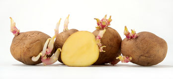 Potatoes Sliced and Sprouting stock photos