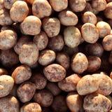 Potatoes - Solanum tuberosum Royalty Free Stock Photography