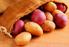 Potatoes spilling from burlap sack Stock Photos