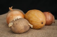 Potatoes with sprouts in the foreground onion and pumpkin on a black background on burlap stock photos