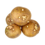 Potatoes with sprouts Stock Images