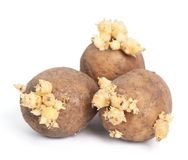 Potatoes with sprouts Stock Photography