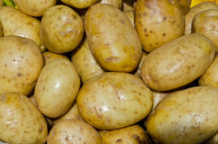 Potatoes. Sweet potatoes background in summer time royalty free stock photography