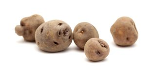 Potatoes of Tenerife Royalty Free Stock Photography