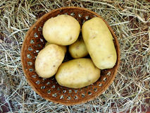 Potatoes to eat Royalty Free Stock Images