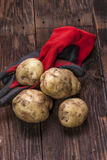 Potatoes on top of garden gloves. Royalty Free Stock Photography