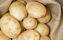 Potatoes in top of hessian sack Royalty Free Stock Image
