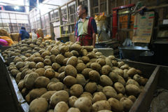 Potatoes. Traders sorting potatoes in the city of Solo, Central Java, Indonesia Royalty Free Stock Photography