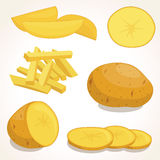 Potatoes vector illustration Stock Image