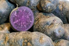 Potatoes. Of the Vitelotte variety on a table Royalty Free Stock Photography