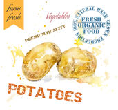 Potatoes watercolor banner Stock Images