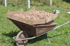 Potatoes in a wheelbarrow Royalty Free Stock Photography