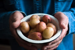 Potatoes in a white bowl in the hands of a man in a blue shirt closeup. Horrizontal Royalty Free Stock Image