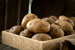 Potatoes in wooden box. Raw potatoes in mud in rustic wooden box. Low key, natural light Royalty Free Stock Photo