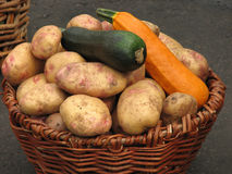 Potatoes and zucchini in a basket. Harvest of potatoes and zucchini in a basket Stock Images