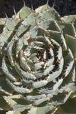 Potatorum Kichijokan d'agave d'agave de papillon photographie stock