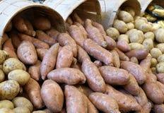 Potatos в корзине Стоковое Фото