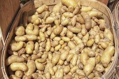 Potatos младенца в рынке фермера, квадрате Copley Стоковое Фото