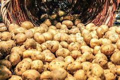 Potatos свежее в корзине Стоковые Фото