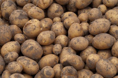 Potatos Fotos de Stock Royalty Free
