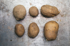Potatos Fotografia Stock