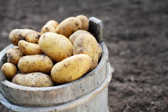 Potatos Royalty Free Stock Photography