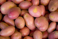 potatos czerwoni obrazy royalty free