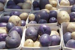 2 potatos de couleurs sur le marché d'agriculteur, place de Copley Photographie stock libre de droits