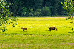 Potatso国家公园,香格里拉 免版税库存照片